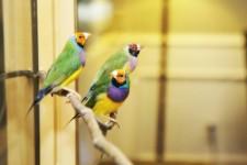 chmtc-birds